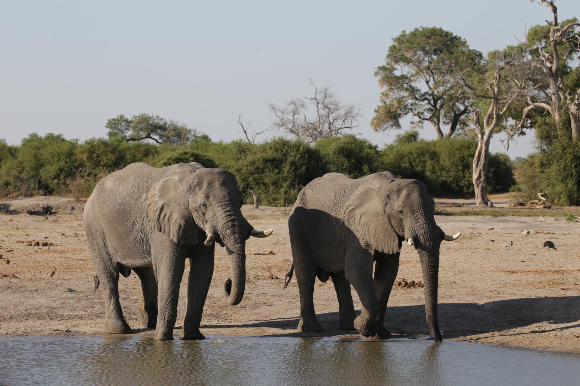Savuti Chobe Botswana