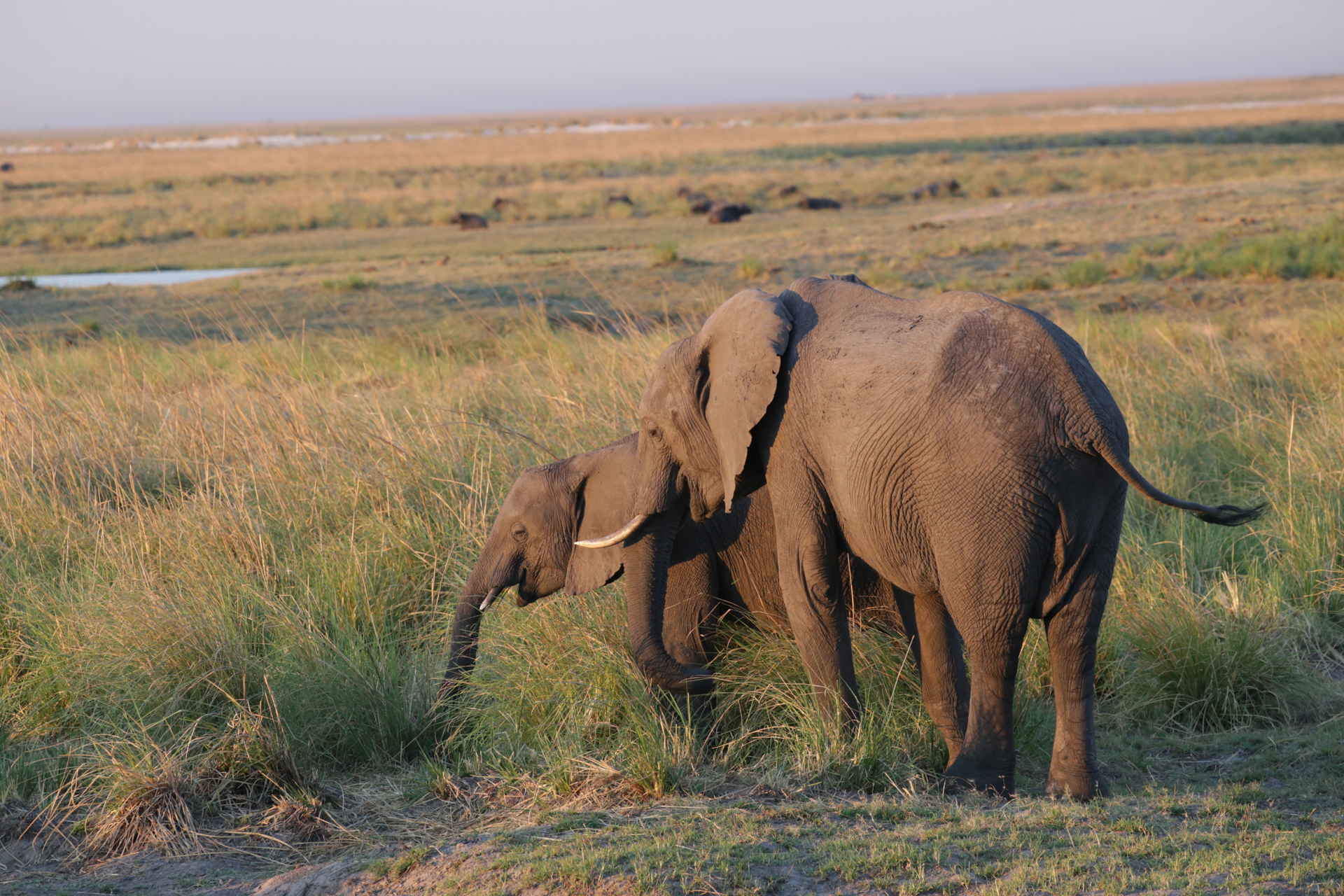 elephants Safari Chobe secteur nord Botswana