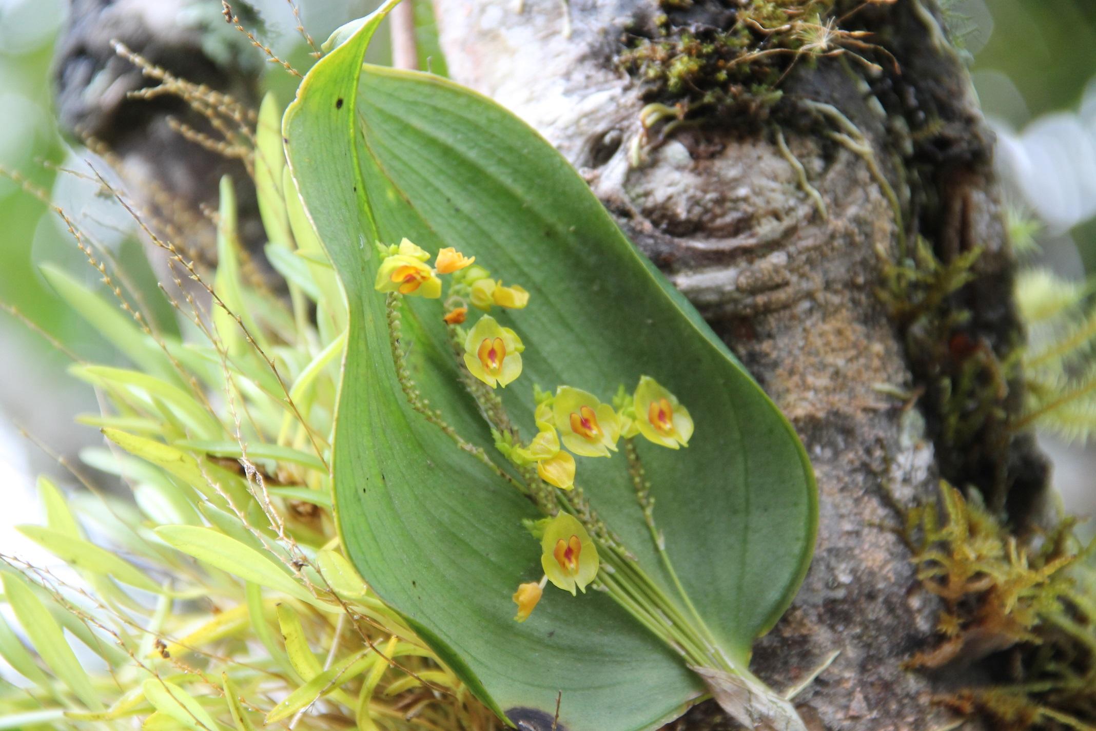 fleurs d'Equateur