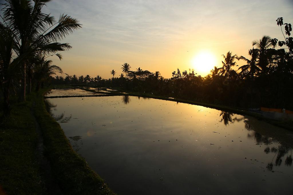 Fin de journée dans les rizières en eau