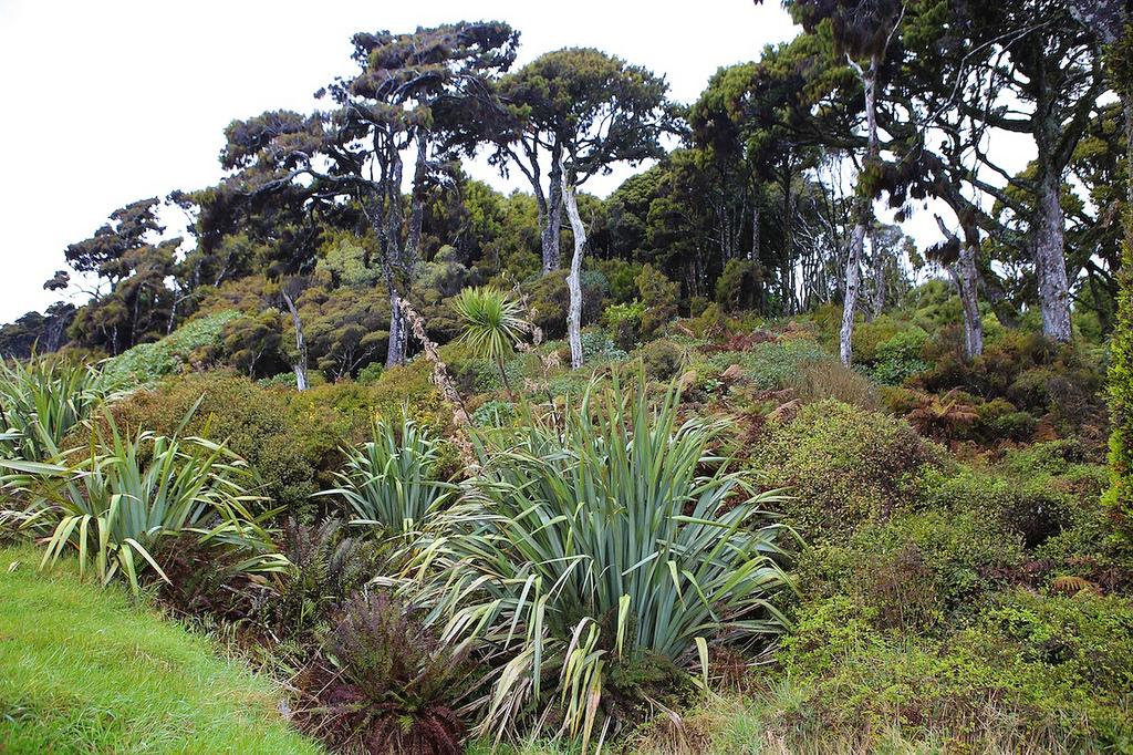 Végétation typique sur le côte face à la mer de Tasmanie