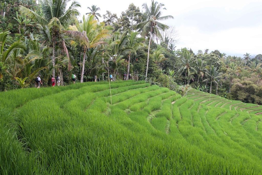 Balade le long des canaux d'irrigation