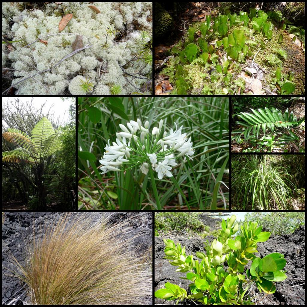 La diversité de la flore de Rangitoto est unique