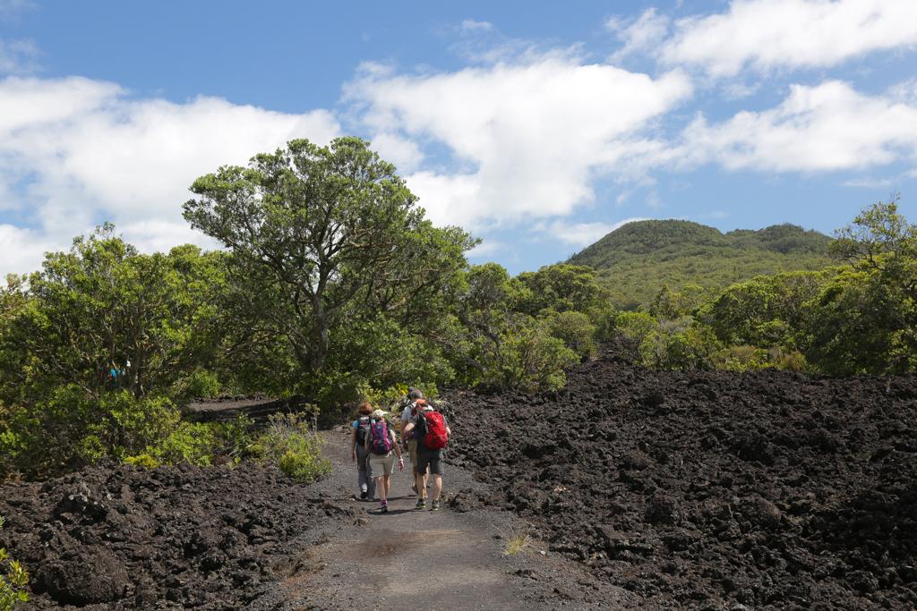 Sur le sentier de montée au volcan Rangitoto