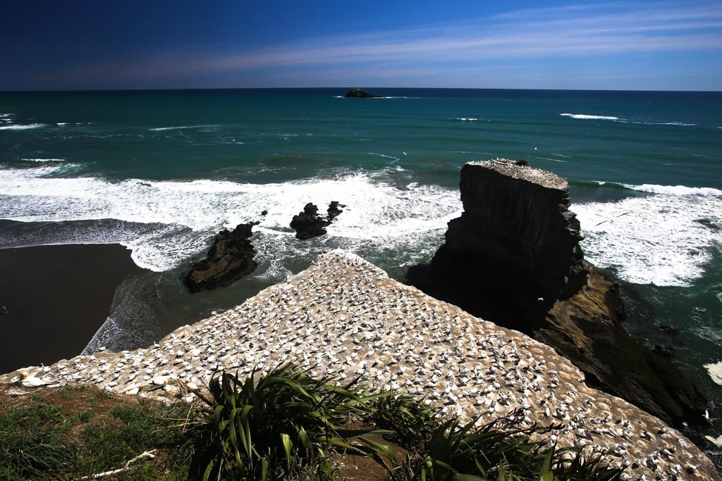 20160123 Baie de Kaipara et Muriwai-7