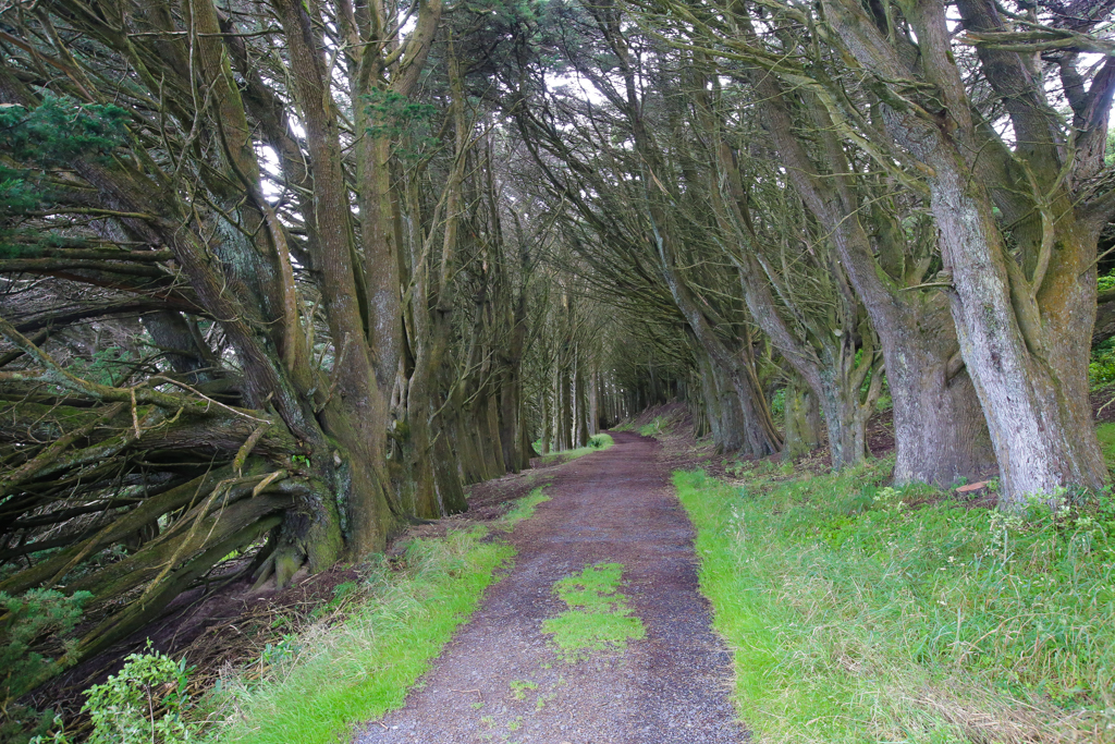 20160209 Otago Peninsula et Dunedin-12