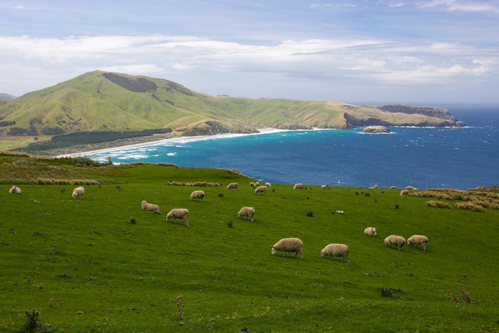 20160209 Otago Peninsula et Dunedin-14
