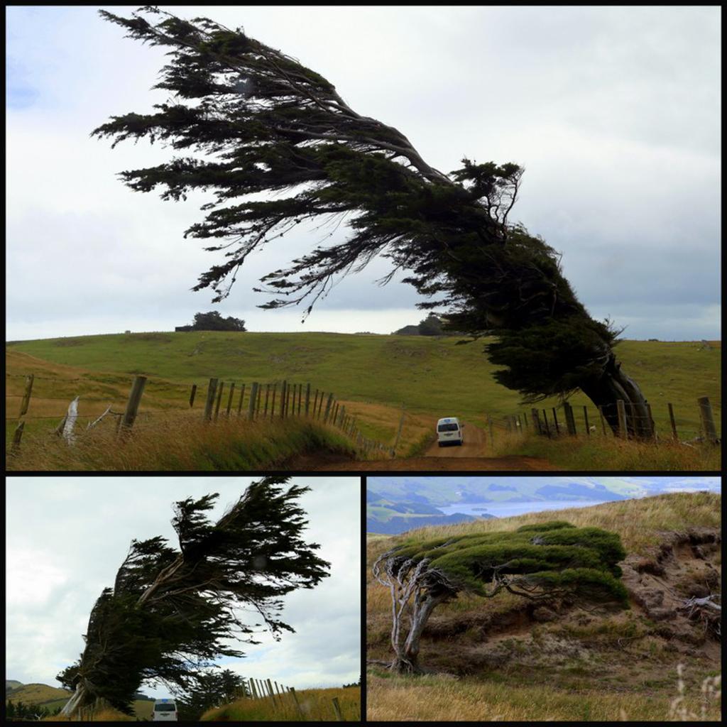 20160209 Otago Peninsula et Dunedin-3