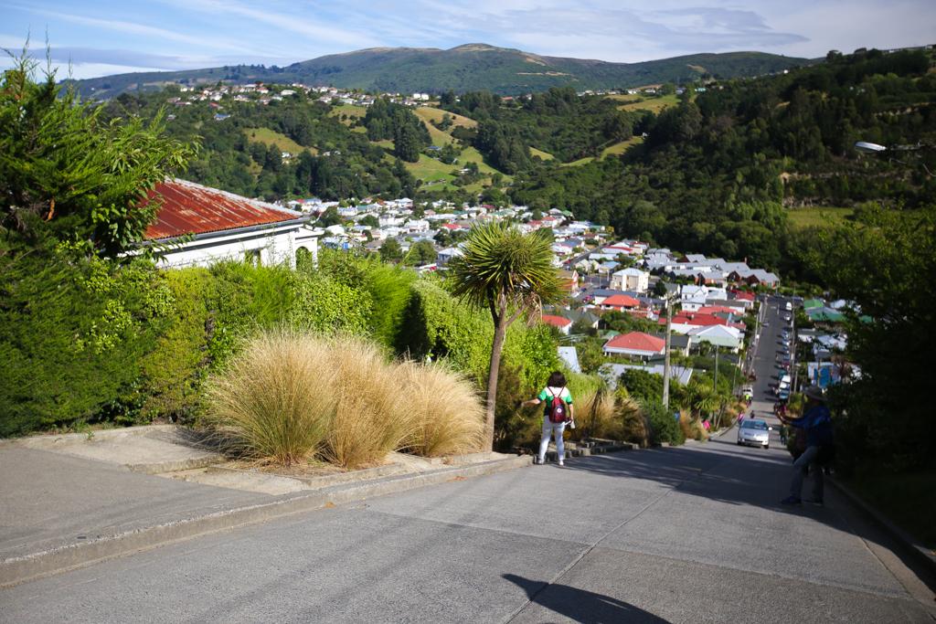 20160209 Otago Peninsula et Dunedin-7