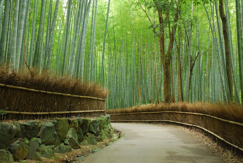 Route des bambous à Sagano. Kyoto