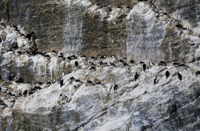 4 Novembre Patagonie Ultima Esperanza - Tyndall (2 sur 13)