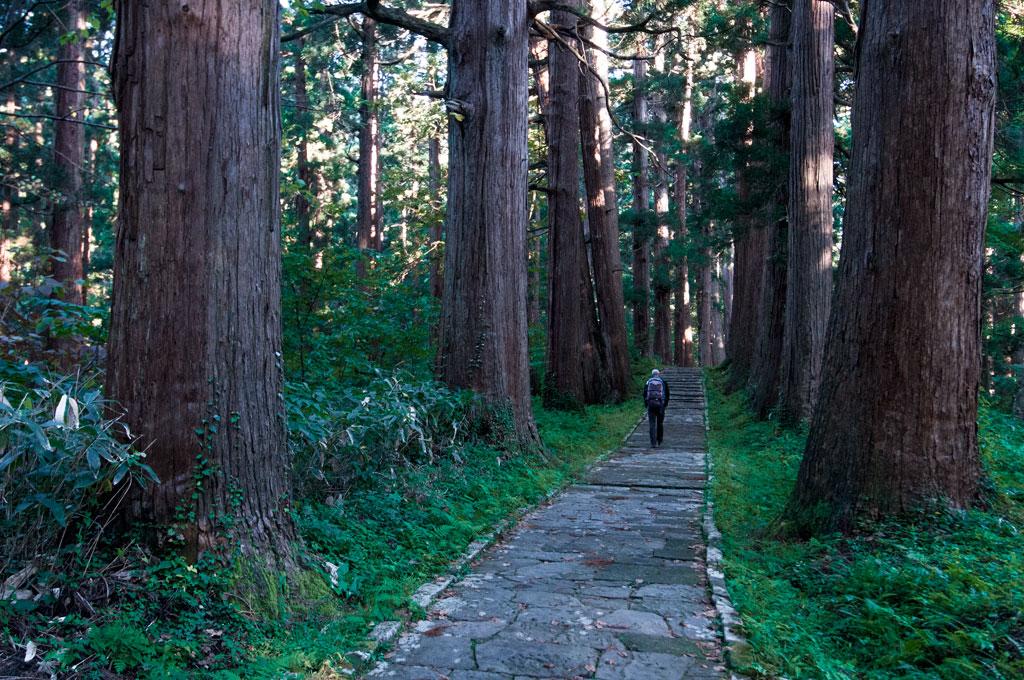 Sur le chemin au milieu des cèdres pour monter au temple de Haguro-san