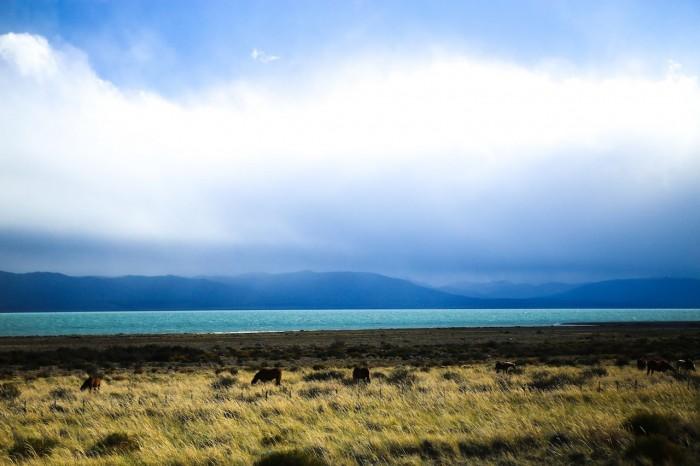 7 Novembre Patagonie Du Païne à Chalten (2 sur 2)
