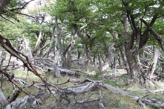 Forêt à la base du Fitz