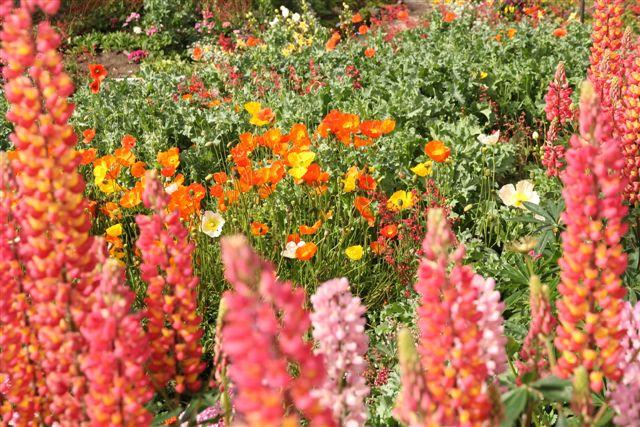 Jardin en fleurs dans le centre ville