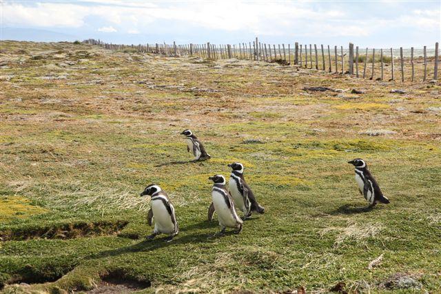 Groupe qui rentre au nid, après 8 heures de pêche