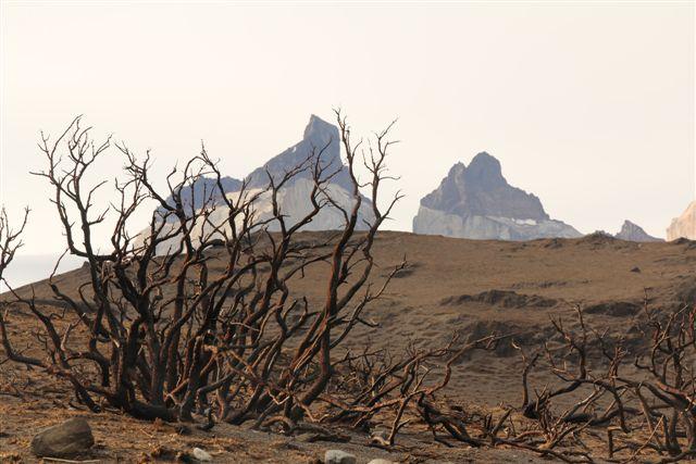 Triste paysage, 10 000 ha partis en fumée !