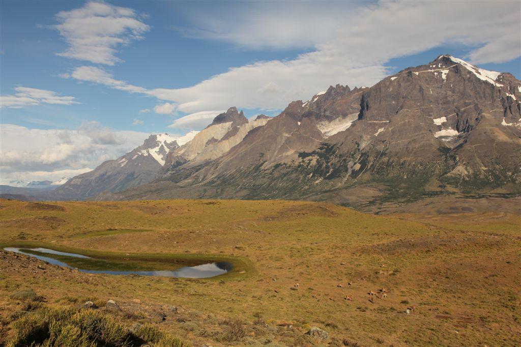 Troupeau de guanacos devant le massif du Paine
