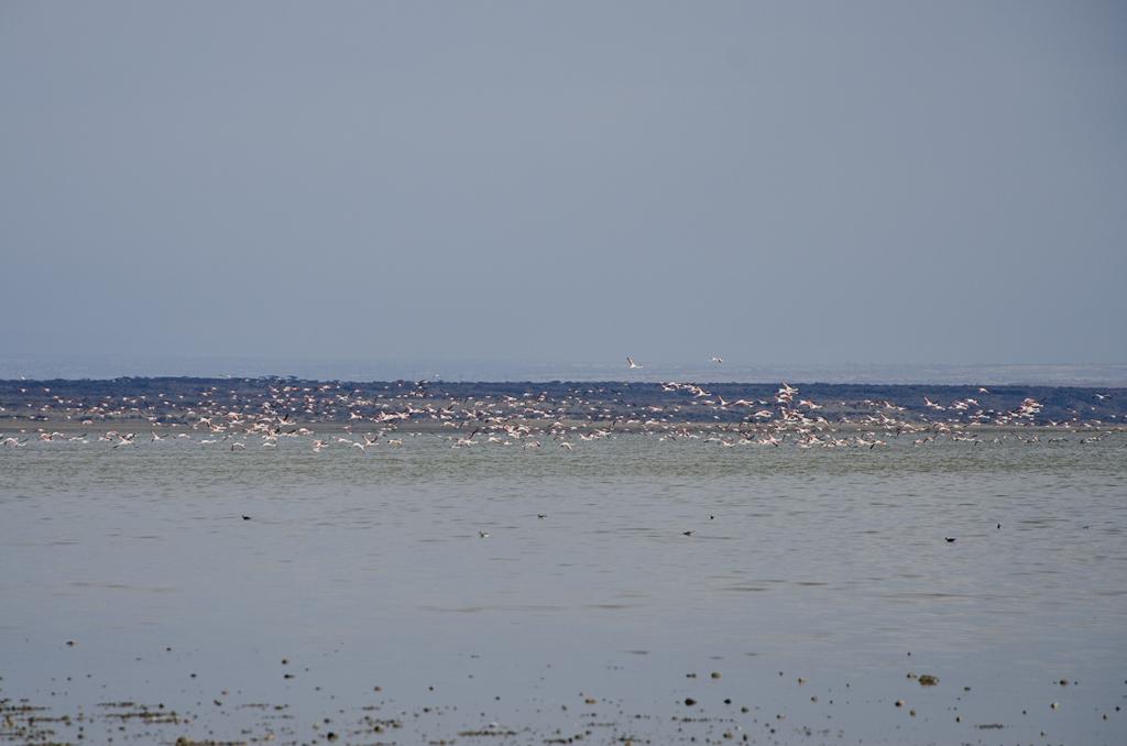 Flamants roses sur le lac Abyata